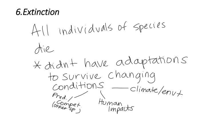 6.Extinction
