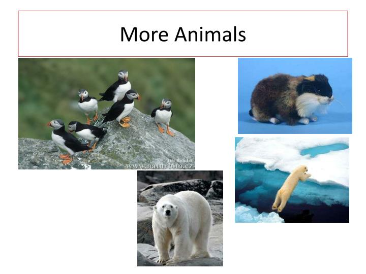 More Animals