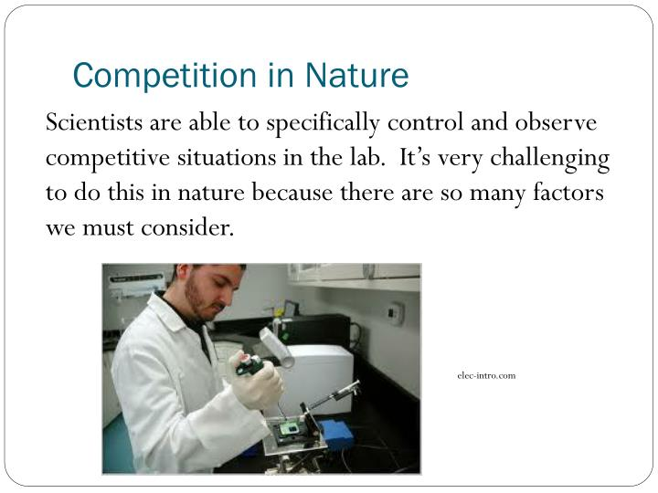 Competition in Nature
