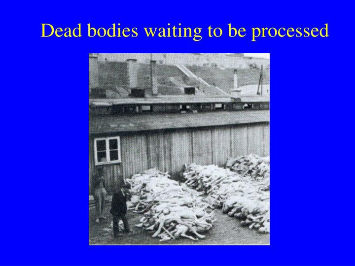 Dead bodies waiting to be processed