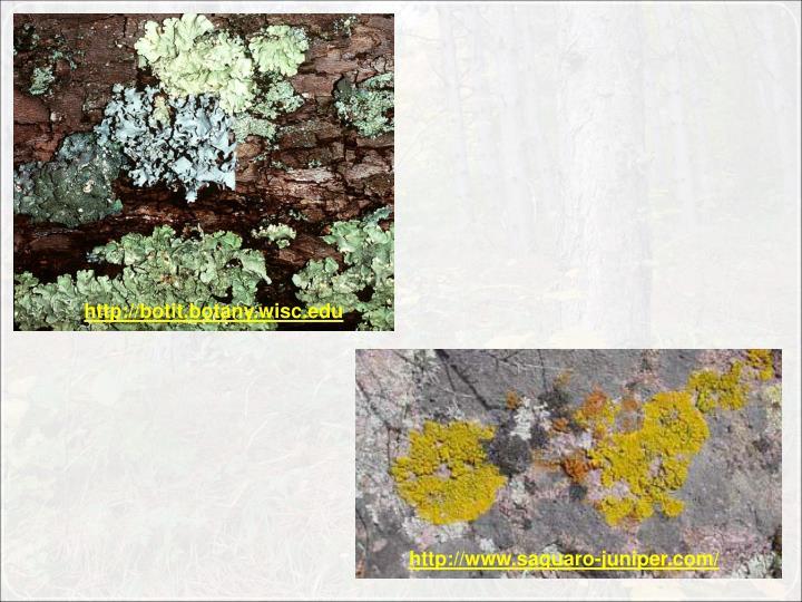 http://botit.botany.wisc.edu