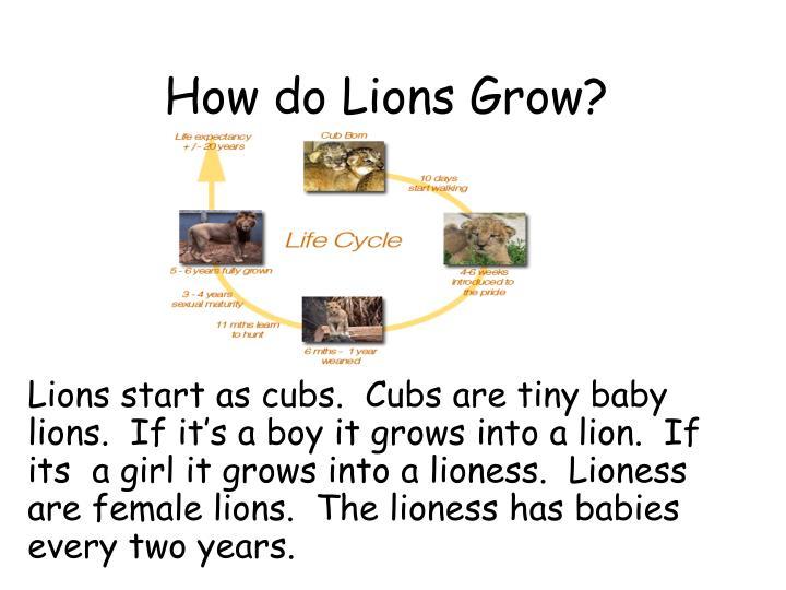 How do Lions Grow?