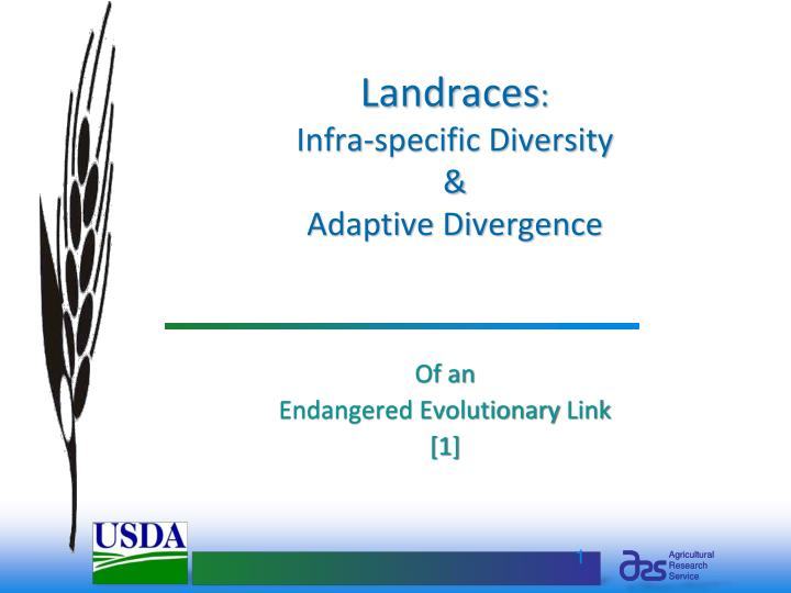 Landraces infra specific diversity adaptive divergence