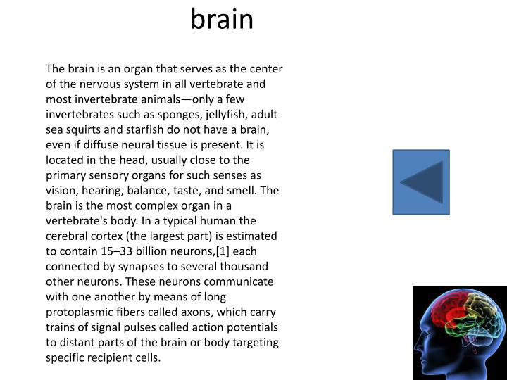 The brain is an organ