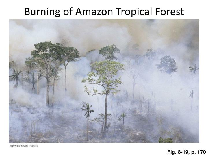 Burning of amazon tropical forest