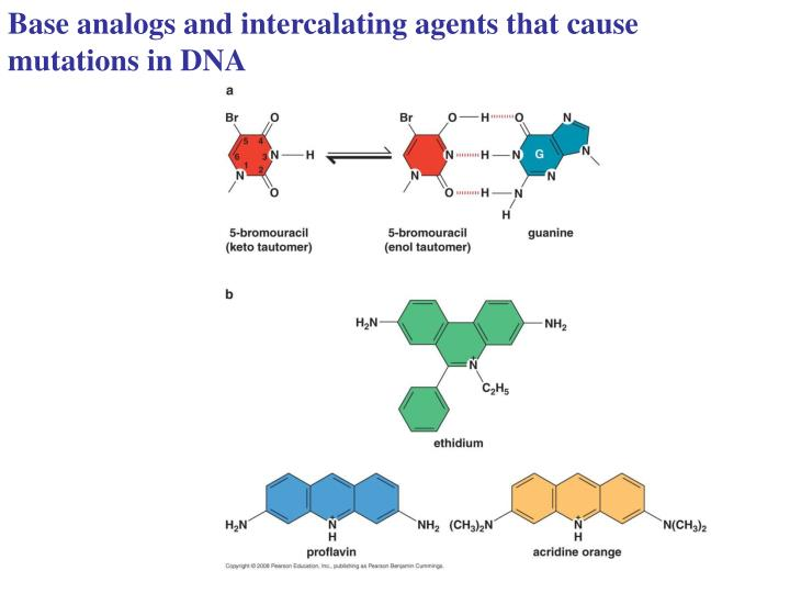 Base analogs and intercalating agents that cause mutations in DNA