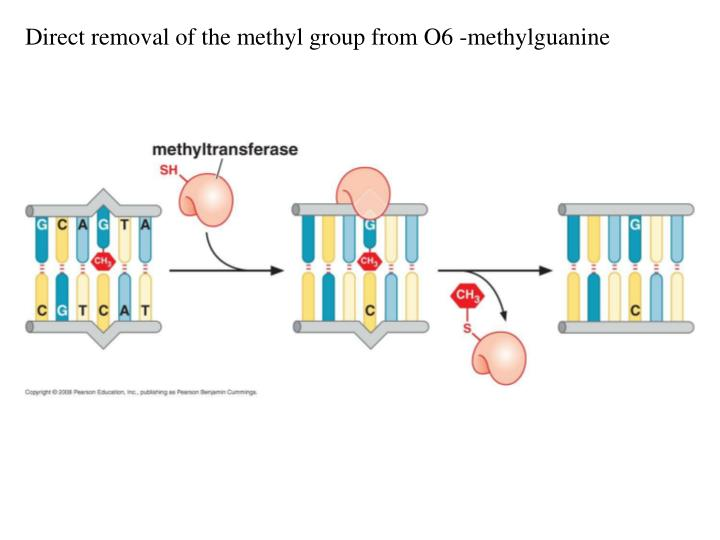 Direct removal of the methyl group from O6 -