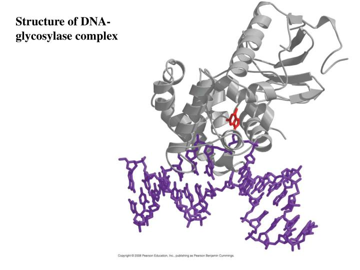 Structure of DNA-