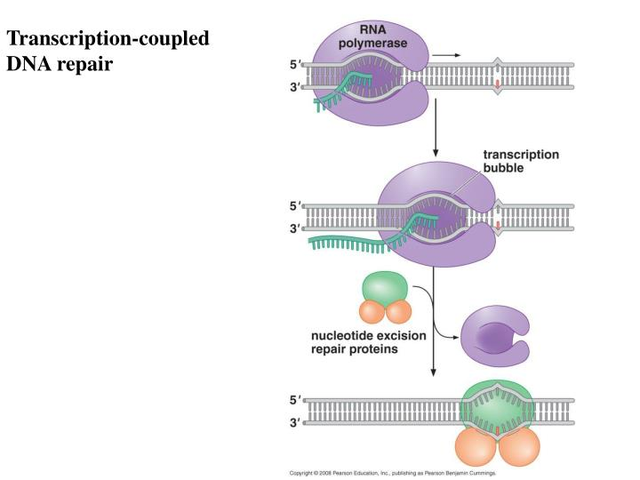 Transcription-coupled DNA repair