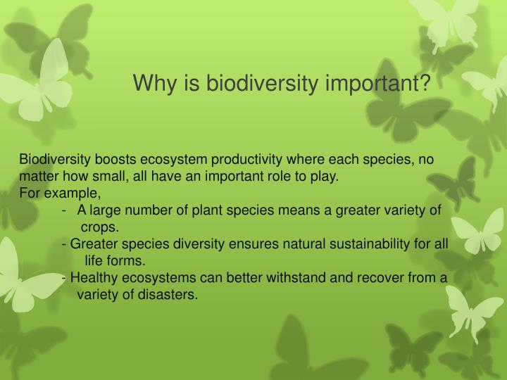 Biodiversity boosts ecosystem productivity where each species, no matter how small, all have an impo...