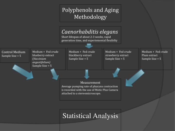 Polyphenols and Aging Methodology
