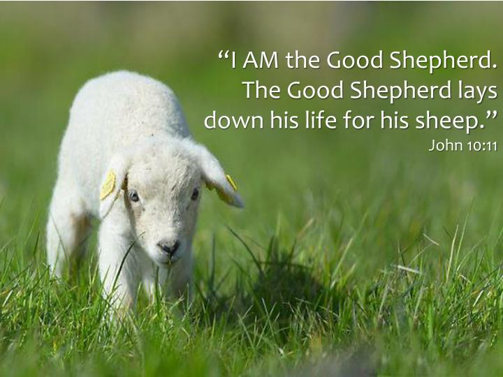 """I AM the Good Shepherd. The Good Shepherd lays down his life for his sheep."""