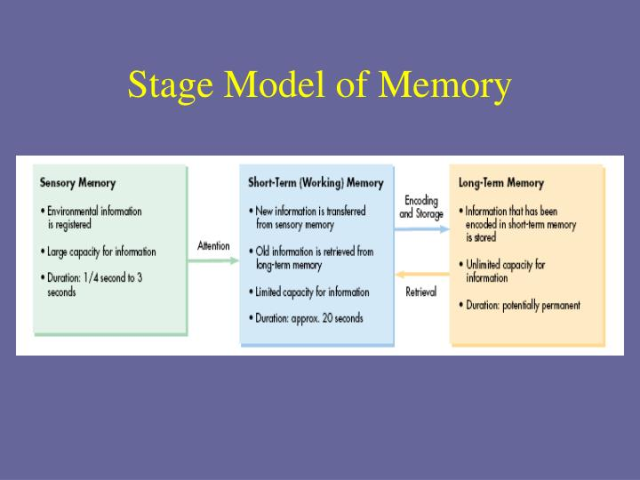 the 3 stages of memory essay The three stage model of memory – module 61 fill in the following boxes by identifying and defining the memory stages (which is different from the information processing system) outlined in.
