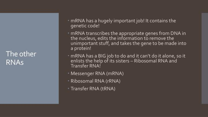 mRNA has a hugely important job! It contains the genetic code!
