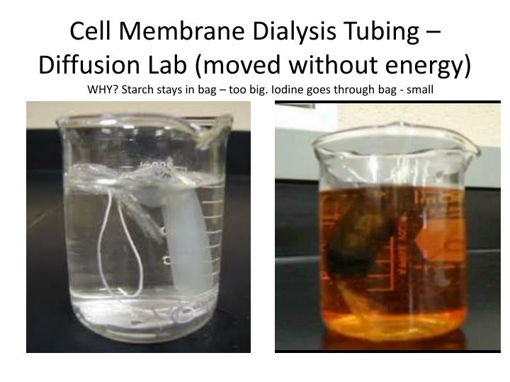 Cell Membrane Dialysis Tubing – Diffusion Lab (moved without energy)