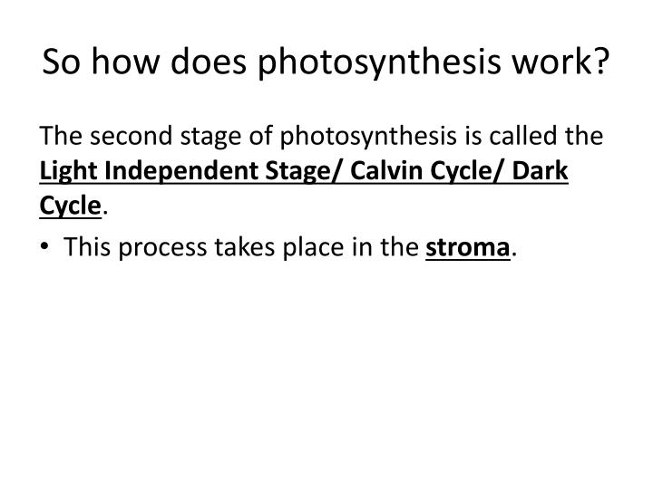 So how does photosynthesis work?