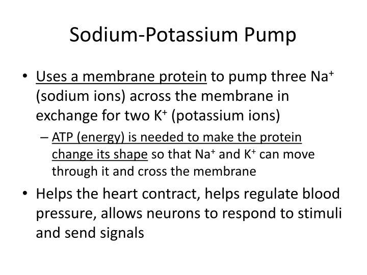 Sodium-Potassium Pump
