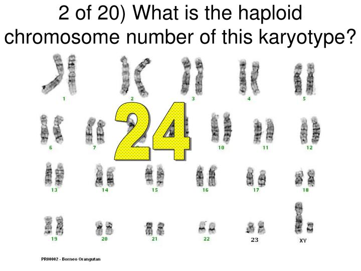 2 of 20) What is the haploid chromosome number of this karyotype?