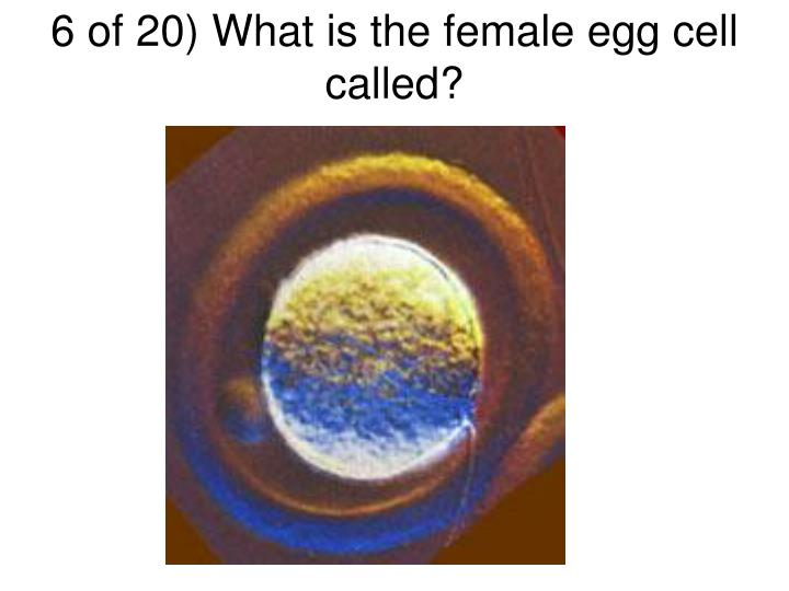6 of 20) What is the female egg cell called?