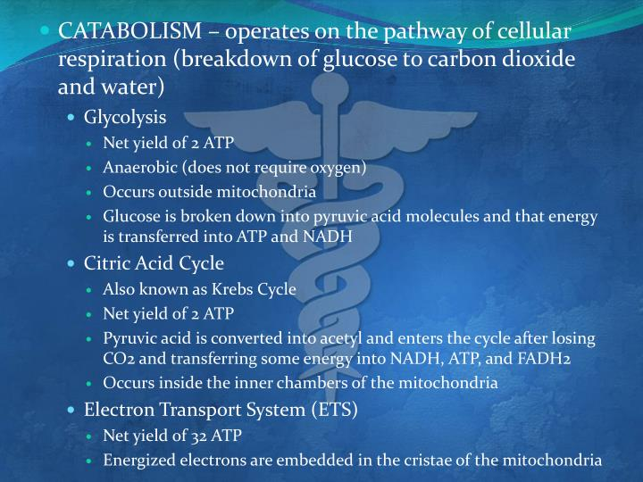 CATABOLISM – operates on the pathway of cellular respiration (breakdown of glucose to carbon dioxide and water)
