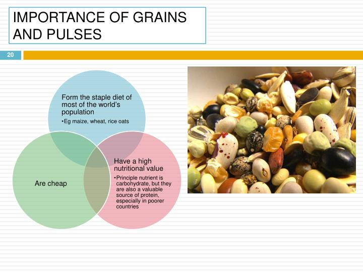 IMPORTANCE OF GRAINS AND PULSES