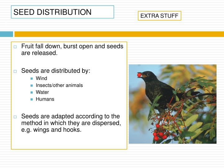 SEED DISTRIBUTION