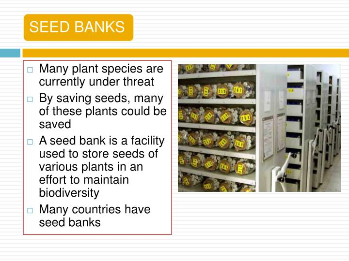 Many plant species are currently under threat