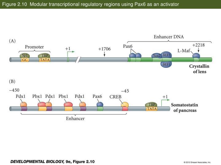 Figure 2.10  Modular transcriptional regulatory regions using Pax6 as an activator