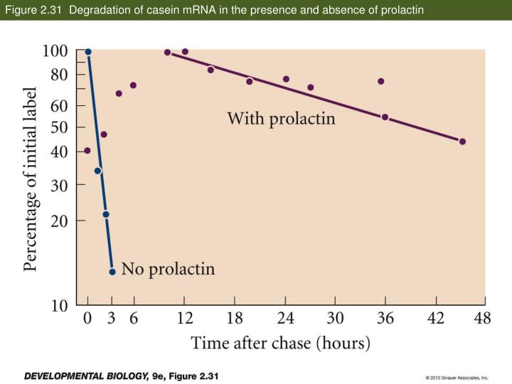 Figure 2.31  Degradation of casein mRNA in the presence and absence of prolactin