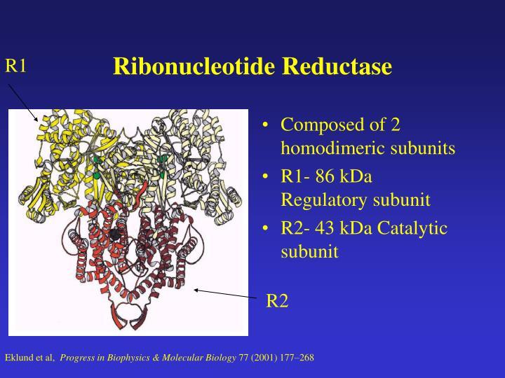Ribonucleotide Reductase