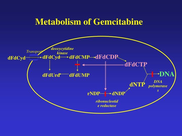 Metabolism of Gemcitabine