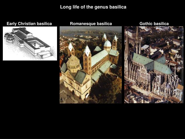 Long life of the genus basilica