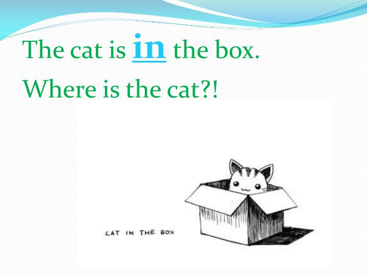 The cat is