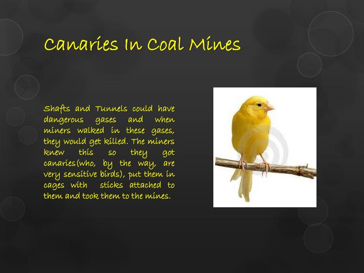 Canaries In Coal Mines