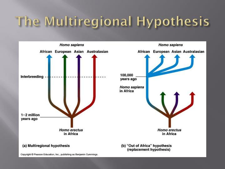"""a comparison of the multiregional theory and the out of africa theory Other articles where out of africa i is discussed: homo erectus: theories of gradual change:by supporters of the """"out of africa"""" hypothesis, who find the threshold concept at variance with the modern genetic theory of evolutionary change."""