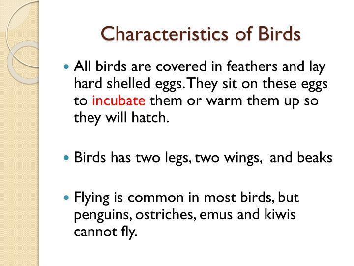 Characteristics of Birds