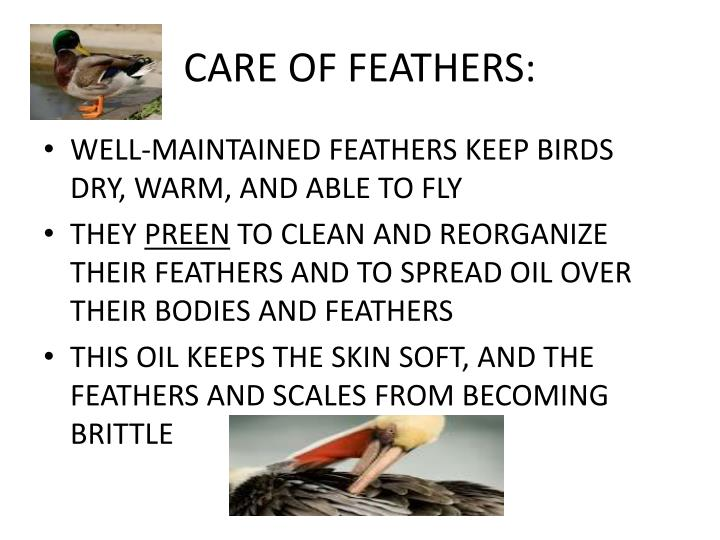 CARE OF FEATHERS: