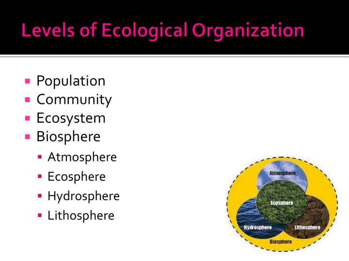 Levels of ecological organization