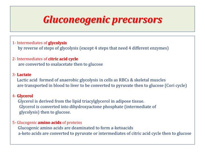 Gluconeogenic