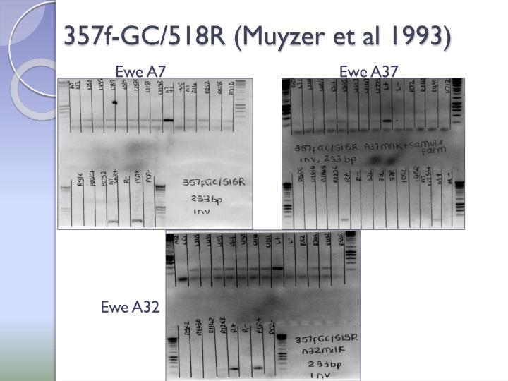 357f-GC/518R (Muyzer et al 1993)