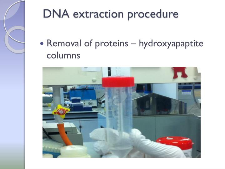 DNA extraction procedure