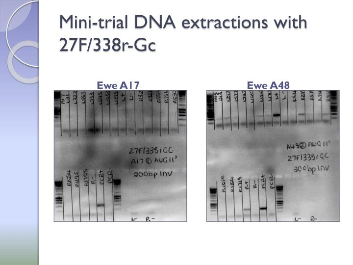Mini-trial DNA extractions with 27F/338r-Gc