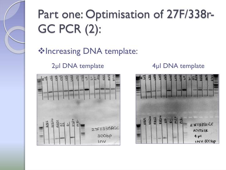Part one: Optimisation of 27F/338r-GC PCR (2):