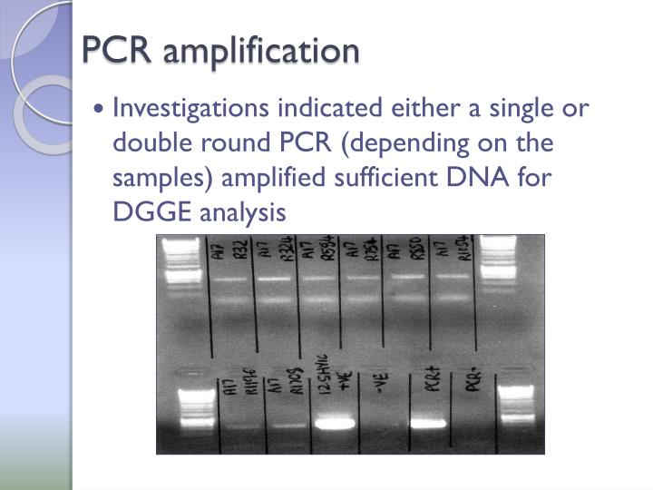 PCR amplification