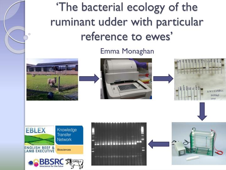 'The bacterial ecology of the ruminant udder with particular reference to ewes'