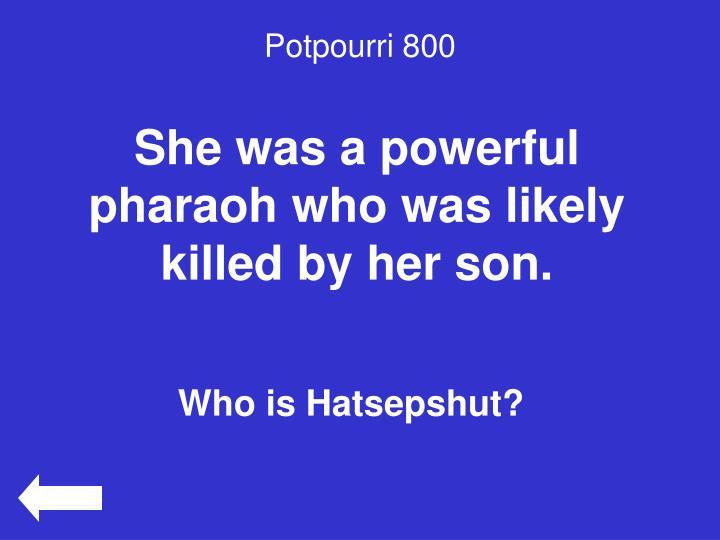 Potpourri 800