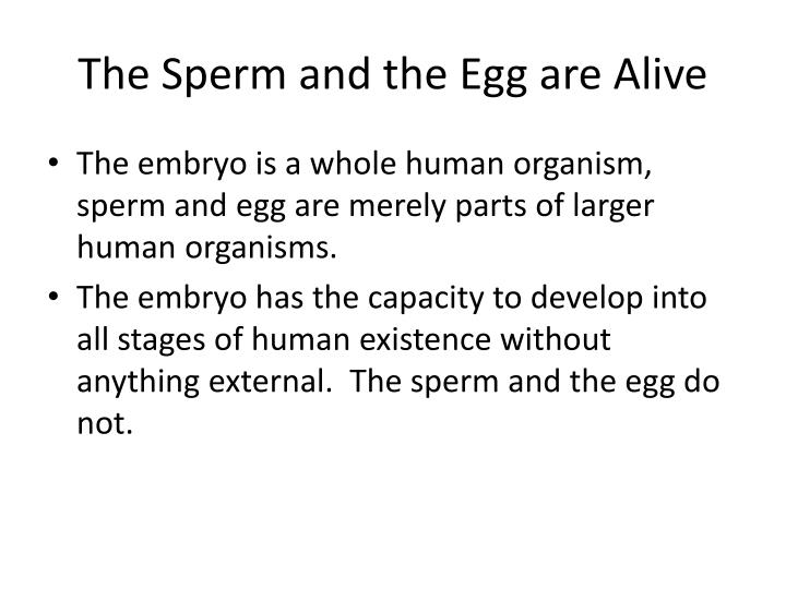 The Sperm and the