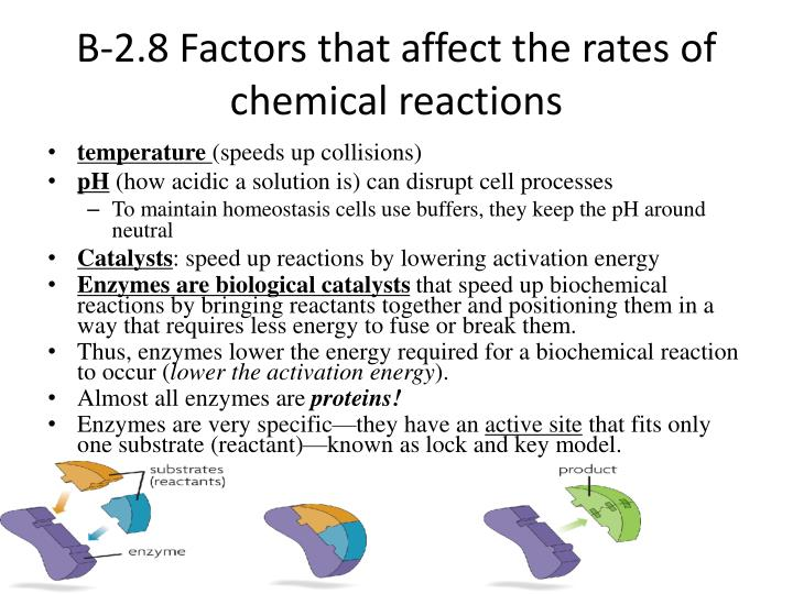 B-2.8 Factors that affect the rates of chemical reactions