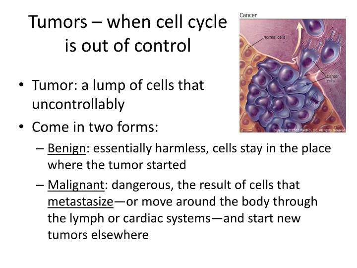 Tumors – when cell cycle is out of control