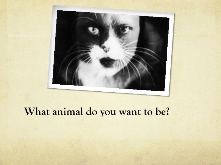 What animal do you want to be?